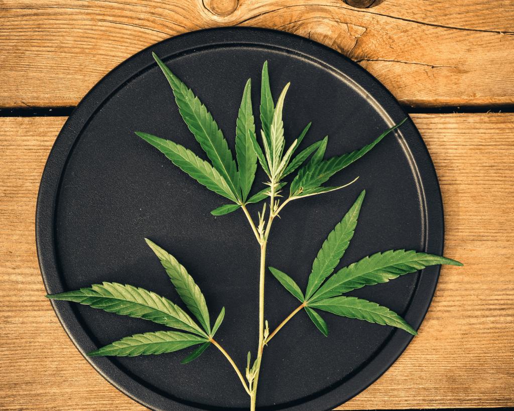 Cannabidiol plante